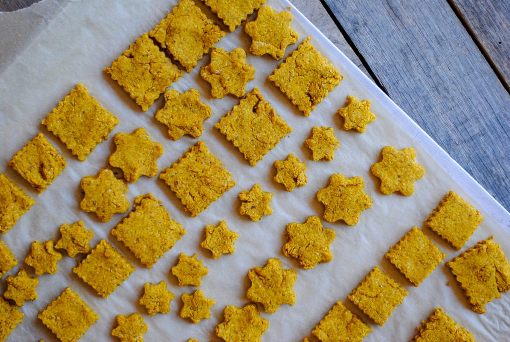 homemade dog treats with pumpkin and oats - our maltipoo loves them!